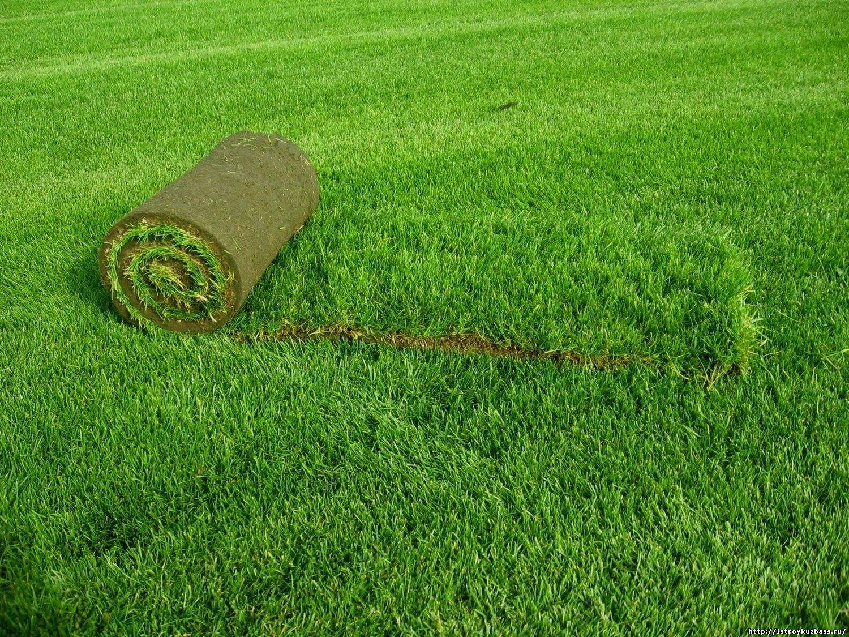 Виды газона. Особенности и отличия разных видов газона