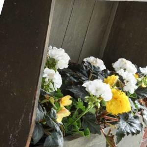 настенные полки для цветов