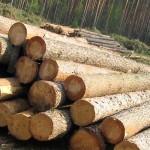 Выбор и заготовка древесины для строительства